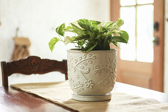 white ceramic pot with Marble Queen Pothos